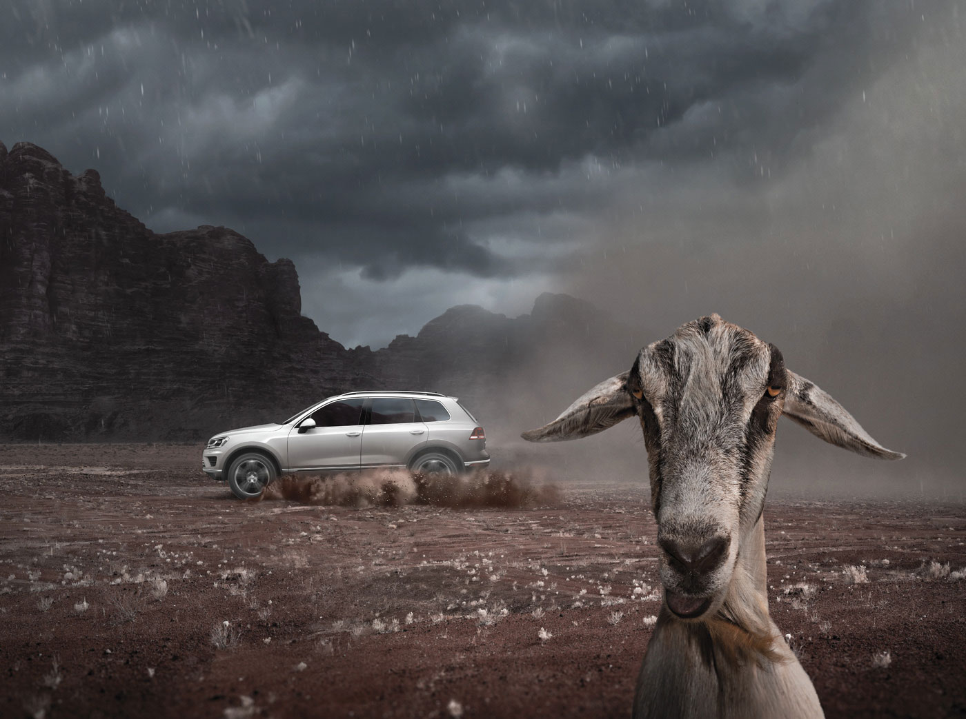 Volkswagen Animals